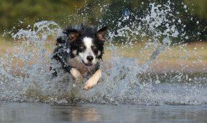 Hundeernährungsberatung